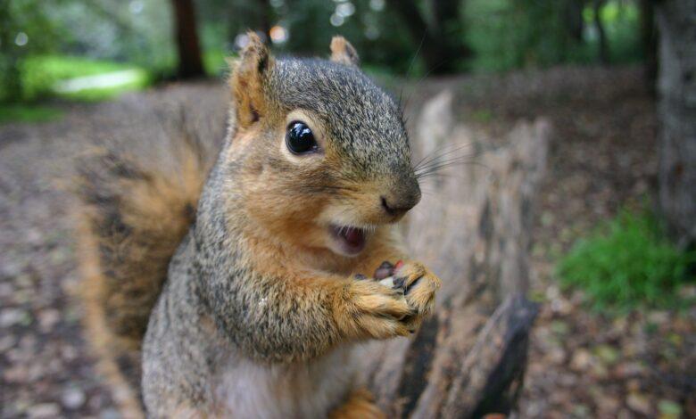 18 faits surprenants sur les écureuils