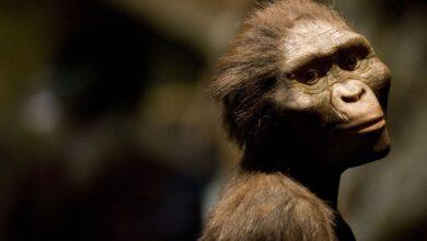 8 Faits intéressants sur Lucy, l'ancien singe