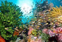 9 Créatures dangereuses des récifs coralliens