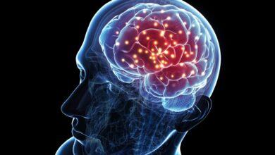 Anatomie du cerveau : Structures et leur fonction