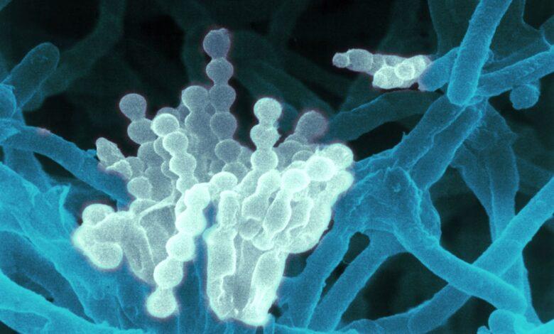 Antibiotiques - Découverte et résistance