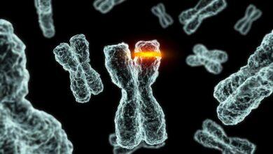 Comment les mutations chromosomiques se produisent