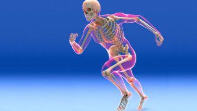 Fonction et composants du système squelettique