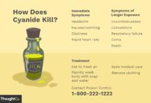La chimie de l'empoisonnement au cyanure et pourquoi il tue