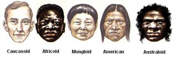 Les principales variantes de l'Homo Sapiens