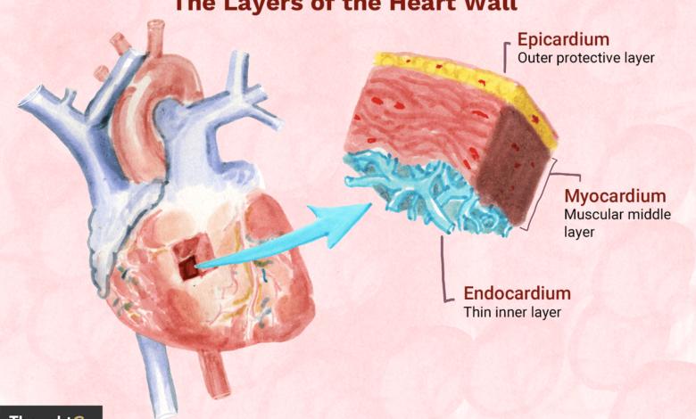 Les 3 couches du mur du coeur