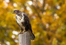 Quel est ce bruit ? 7 appels de la faune que vous pourriez entendre dans votre jardin