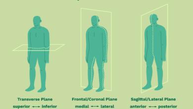 Termes directionnels anatomiques et plans corporels